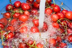 Washing Cherry Royalty Free Stock Photography
