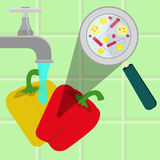 Washing contaminated bell peppers. Contaminated bell peppers being cleaned and washed in a kitchen. Microorganisms, virus and bacteria in the vegetable enlarged Stock Image