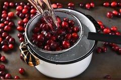 Washing Cranberries Royalty Free Stock Photos