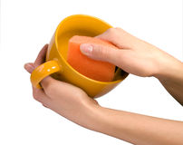 Washing cup. Women's hands washing cup with sponge Stock Images
