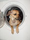 Washing and dog Stock Image