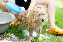 Washing The Dog Stock Photography