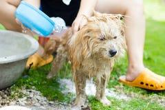 Washing The Dog Stock Photography