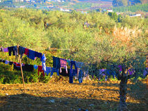 Washing drying in olive grove Stock Photo