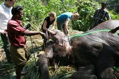 Washing the elephant Royalty Free Stock Image