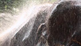 Washing elephant stock footage