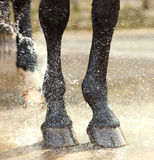 Washing of feet and hooves horse closeup. Washing of feet and hooves horse stock image