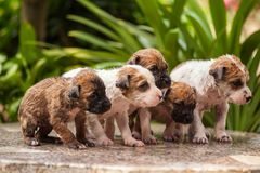 Washing five puppy dog Stock Photography