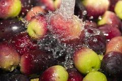 Washing fresh olives Stock Images