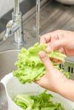 Washing fresh vegetable Royalty Free Stock Photo