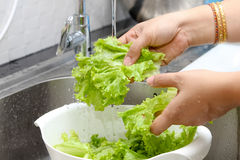 Washing fresh vegetable Stock Image