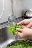 Washing fresh vegetable Stock Photography