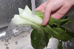 Washing fresh vegetables Stock Image