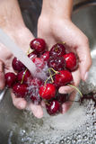 Washing of fruits, cherries stock photography