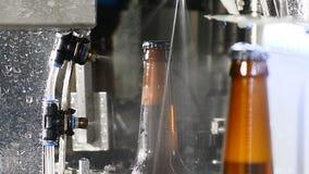 Washing of full beer bottles in conveyor. Glass bottle factory. Bottles on industrial line. Beer brown glass bottles stock footage