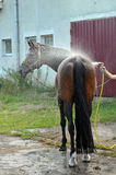 Washing horse Stock Photo