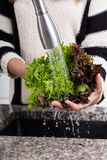 Washing lettuce Stock Photo