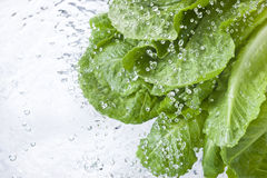 Free Washing Lettuce Leafy Water Spray Drops Royalty Free Stock Images - 62110219