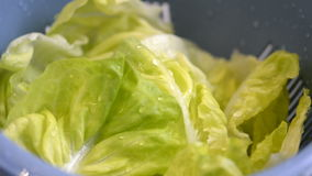 Washing lettuce leaves for salad stock video