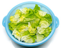 Washing of lettuce in a plastic bowl Stock Photos