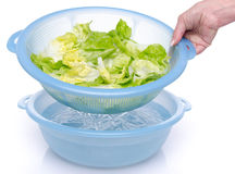 Washing of lettuce in a plastic bowl Stock Photography