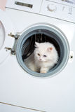 Washing machine and cat Royalty Free Stock Photo