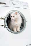 Washing machine and cat Stock Image