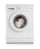 Washing machine and cat Royalty Free Stock Image