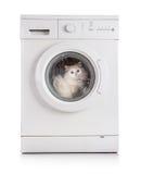 Washing machine and cat Royalty Free Stock Image