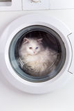Washing machine and cat Royalty Free Stock Images