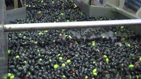 Washing Olives 8