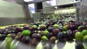 Washing Olives 4