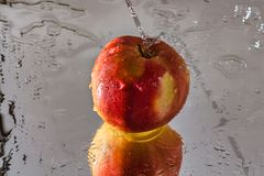 Washing one red apple with reflection and with splashes and drops of water. The process of washing one beautiful red apple with reflection and with splashes and Stock Image