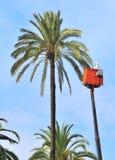 Washing of palm tree Stock Images