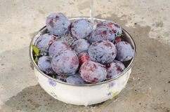 Washing plums Royalty Free Stock Image