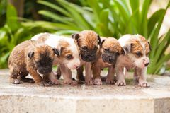 Washing puppy dog Royalty Free Stock Photos