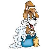 Washing rabbit Stock Images
