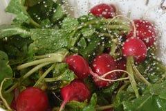 Washing radishes Royalty Free Stock Photo