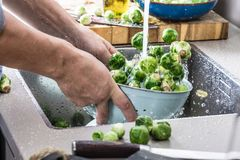 Washing raw Brussels sprouts in kitchen sink.  royalty free stock photos