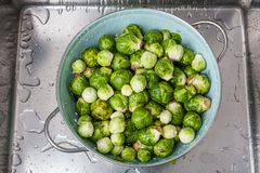 Washing raw Brussels sprouts in kitchen sink.  royalty free stock image