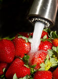 Washing Strawberries. Royalty Free Stock Images