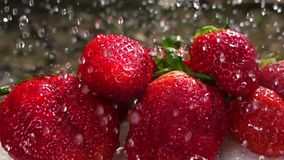 Washing strawberries, water drops slow motion stock video footage