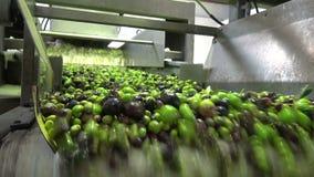 Washing Olives 3