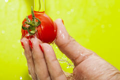 Washing Tomato Royalty Free Stock Images