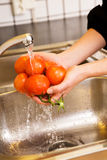 Washing Tomatoes Royalty Free Stock Photos