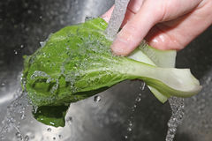 Washing vegetable Stock Image
