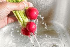Washing vegetables, human hand holding a bunch of radishes under. Running water, copy space, selected focus, narrow depth of field Stock Image