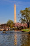 Washington, C.C : Washington Monument Image stock