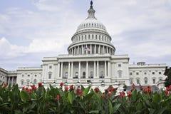 Washington Capitol hermoso enmarcado por las flores rojas brillantes Imagen de archivo libre de regalías