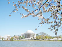 Washington cherry blossoms and Jefferson Memorial March 2010 Royalty Free Stock Photography